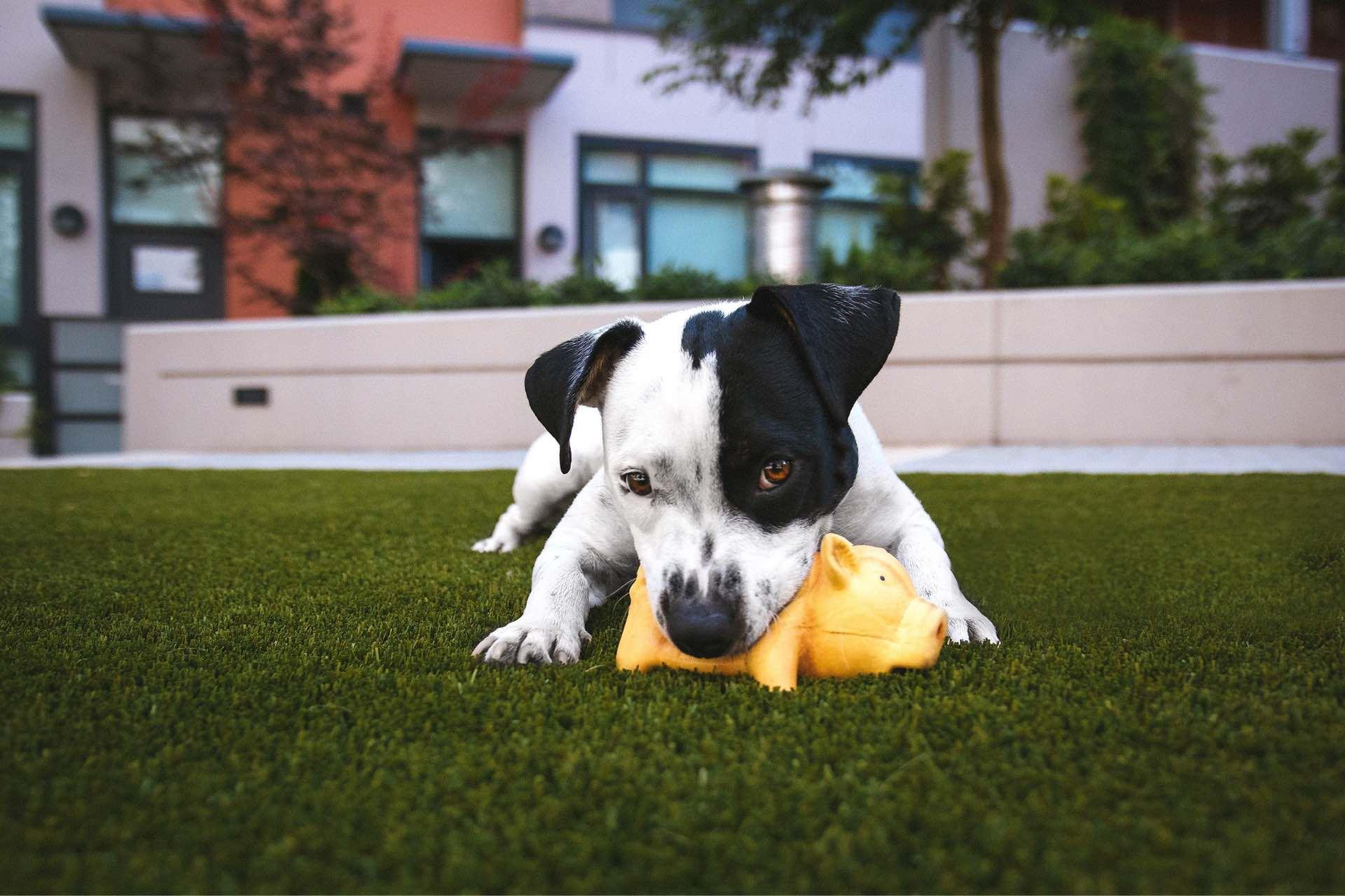 pet amenities at the harvey